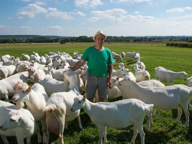 Conseils importants pour les débutants dans l'élevage de chèvres